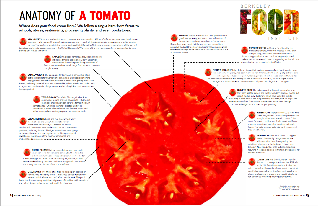Magnificent Tomato Fruit Anatomy Crest Anatomy And Physiology